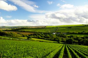 Camel Valley vineyards