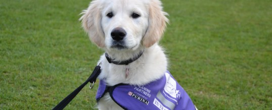 Fundraiser success for Canine Partners