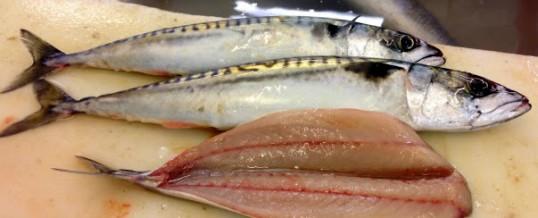 Fabulous, fresh Cornish fish!