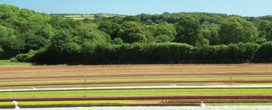 Keeping it local – WestCountry Fruit Sales